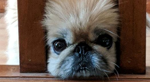 Meet Mini Max